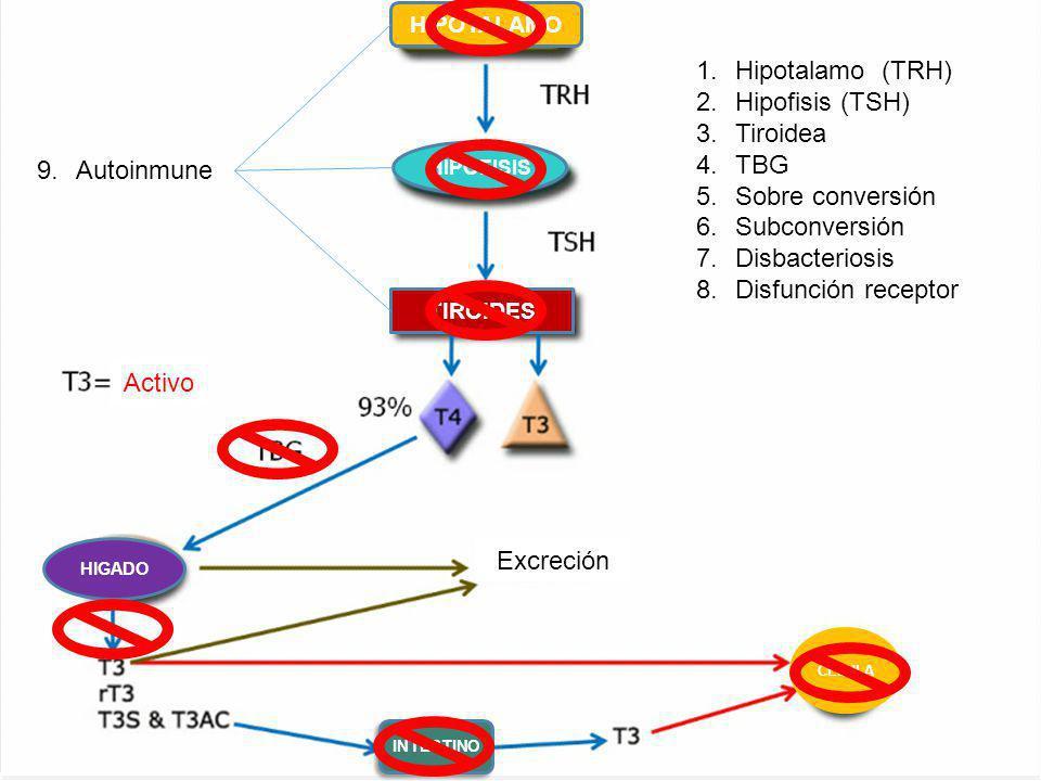 Hipotalamo (TRH) Hipofisis (TSH) Tiroidea TBG Sobre conversión