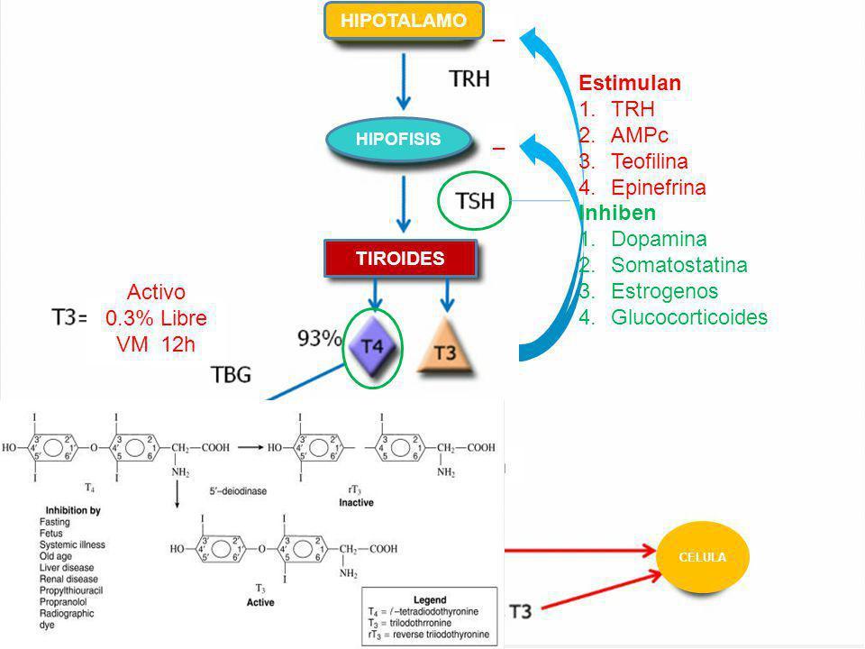 Fisiología Activo 0.3% Libre VM 12h Excreción _ Estimulan TRH AMPc