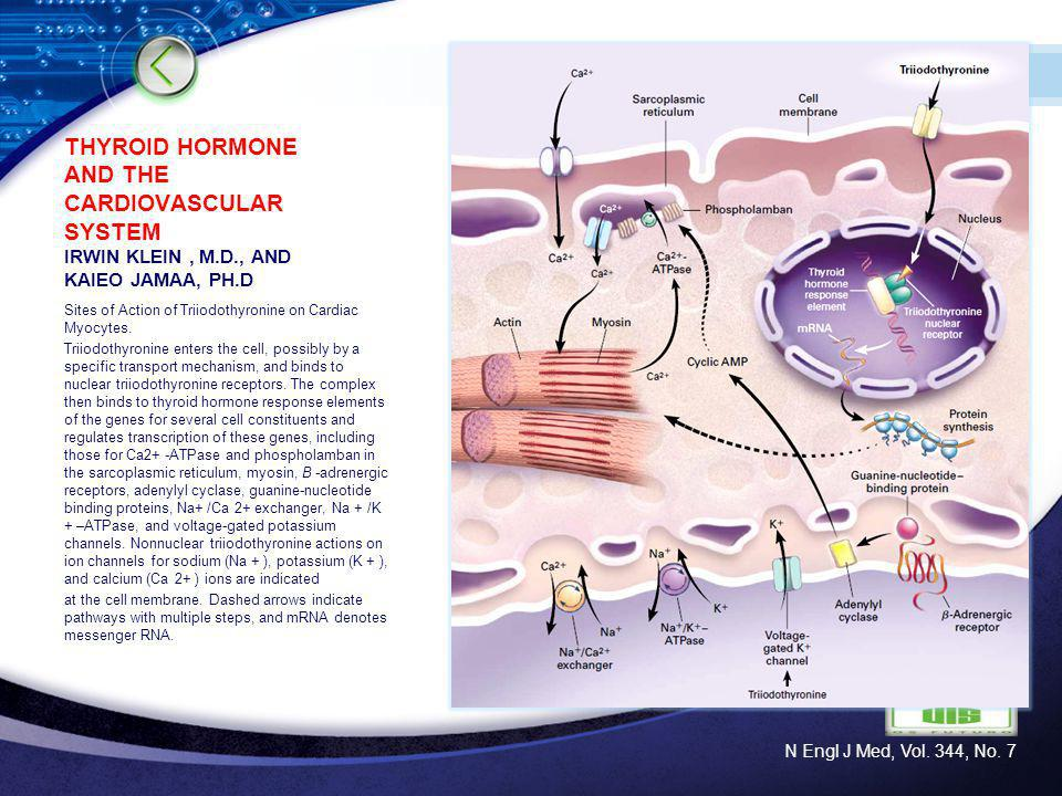 THYROID HORMONE AND THE CARDIOVASCULAR SYSTEM IRWIN KLEIN , M. D