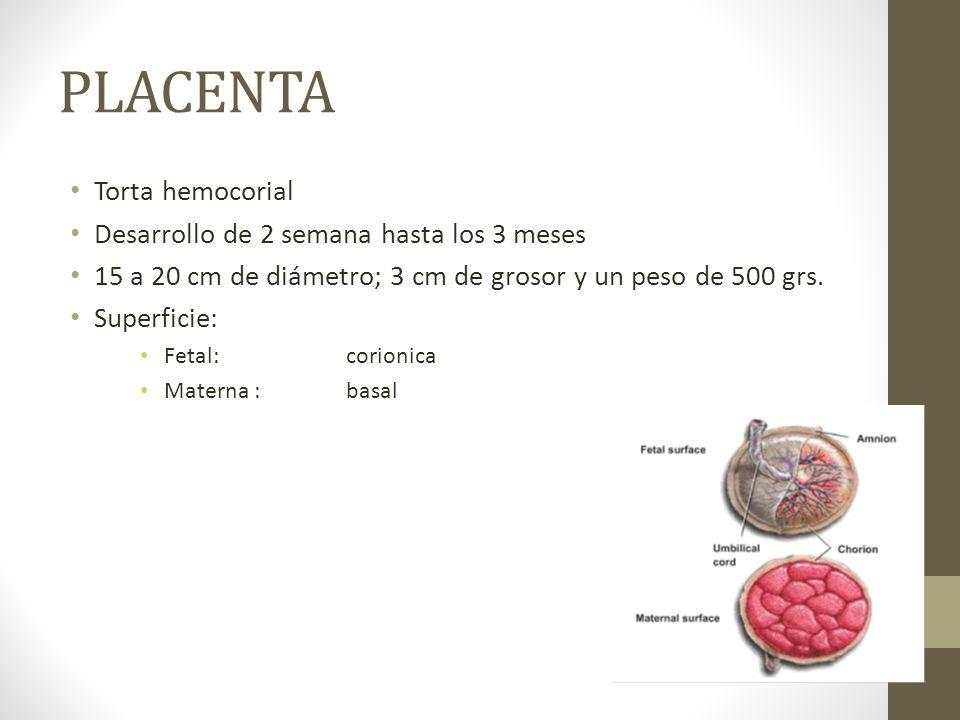PLACENTA Torta hemocorial Desarrollo de 2 semana hasta los 3 meses