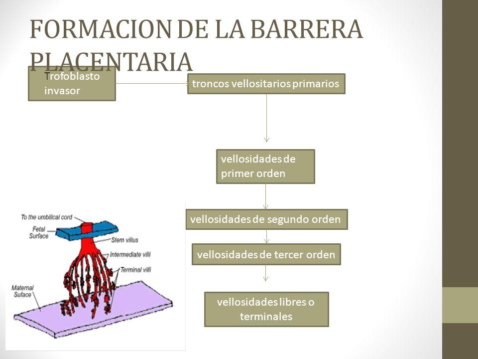 FORMACION DE LA BARRERA PLACENTARIA