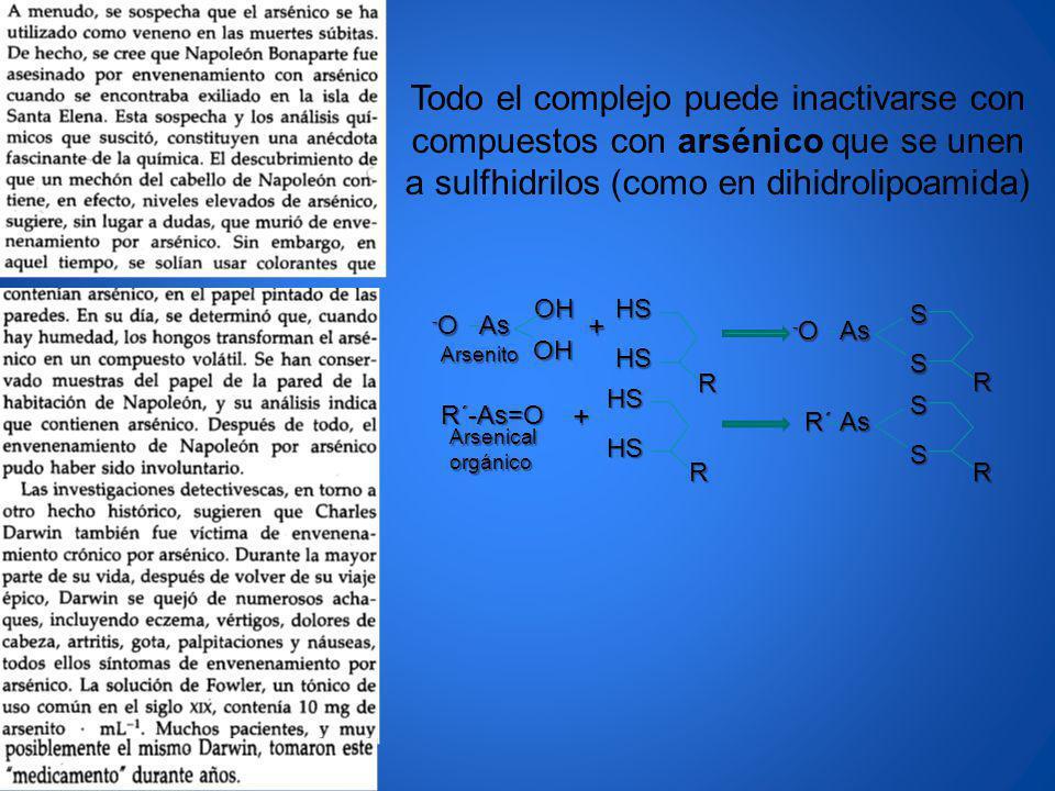 Todo el complejo puede inactivarse con compuestos con arsénico que se unen a sulfhidrilos (como en dihidrolipoamida)