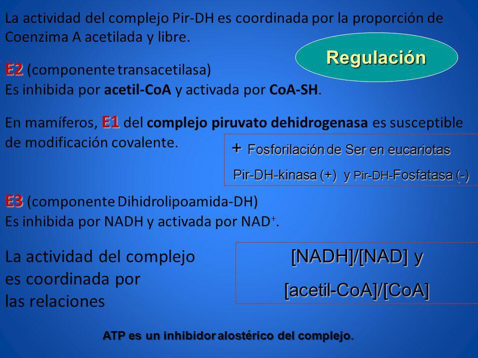ATP es un inhibidor alostérico del complejo.