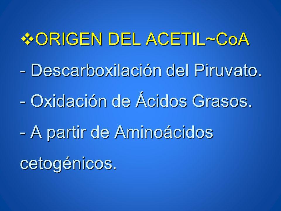 ORIGEN DEL ACETIL~CoA - Descarboxilación del Piruvato