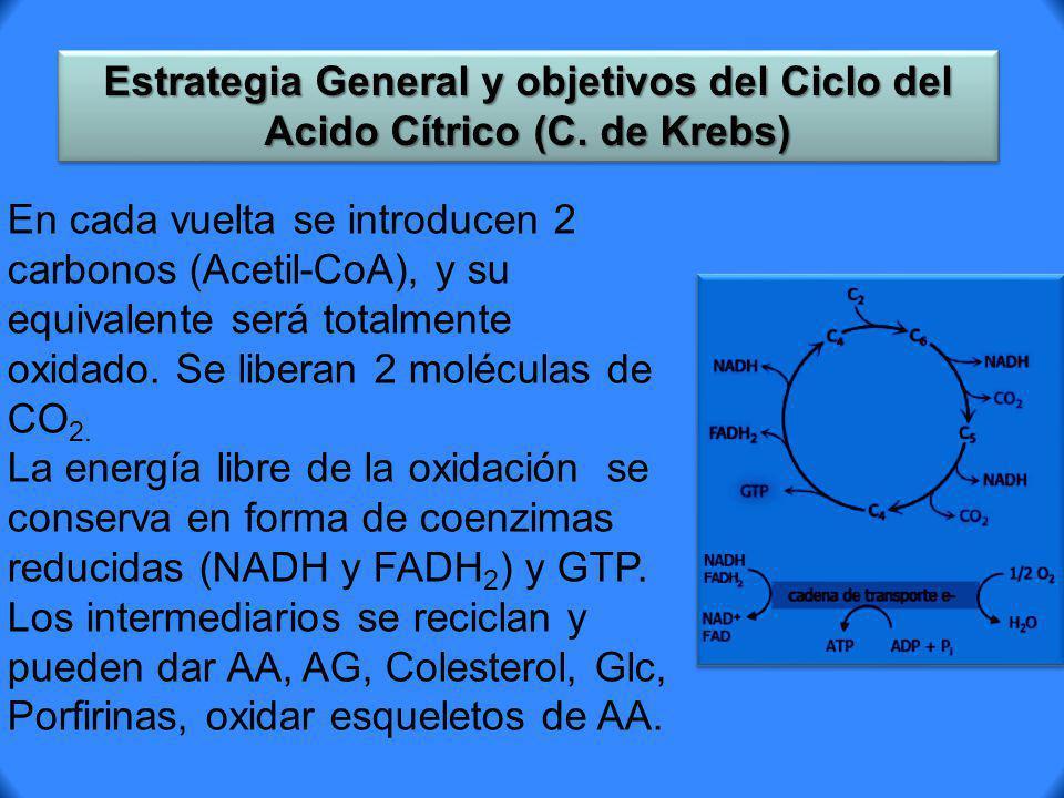 Estrategia General y objetivos del Ciclo del Acido Cítrico (C