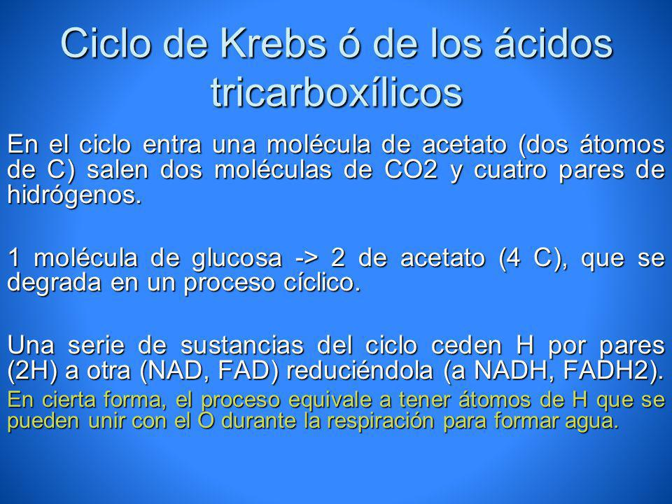 Ciclo de Krebs ó de los ácidos tricarboxílicos