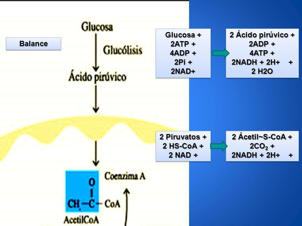 Glucosa + 2ATP + 4ADP + 2Pi + 2NAD+ 2 Ácido pirúvico + 2ADP + 4ATP + 2NADH + 2H+ + 2 H2O.