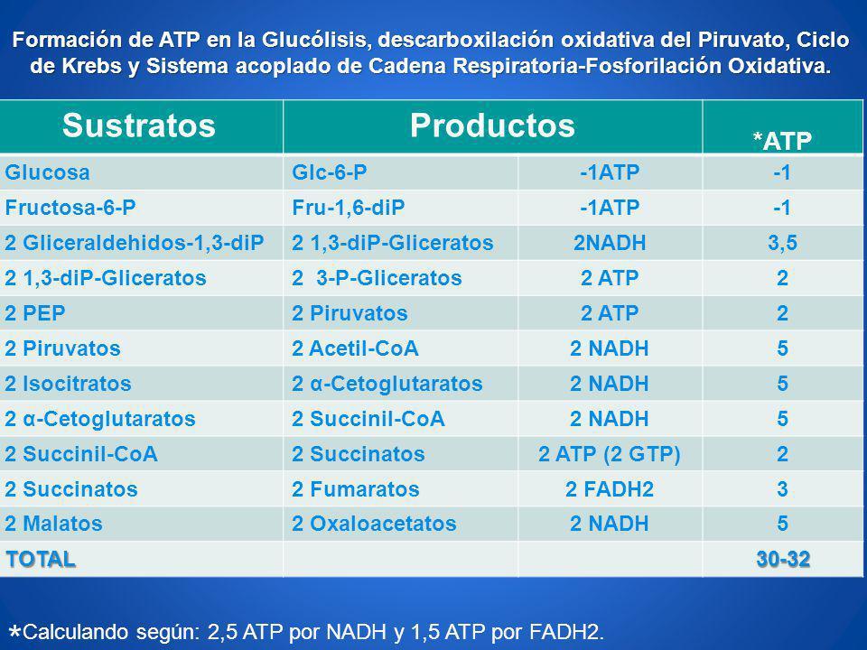 *Calculando según: 2,5 ATP por NADH y 1,5 ATP por FADH2.