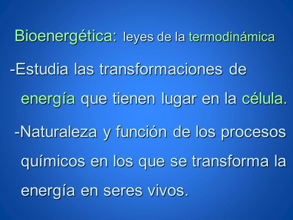 Bioenergética: leyes de la termodinámica