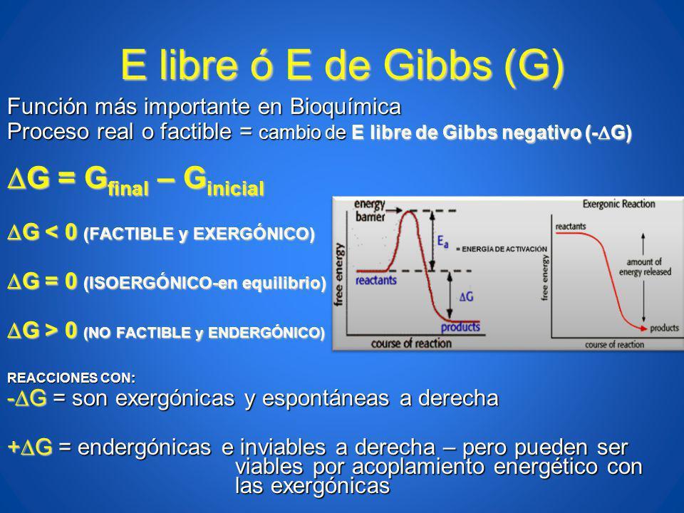E libre ó E de Gibbs (G) G = Gfinal – Ginicial