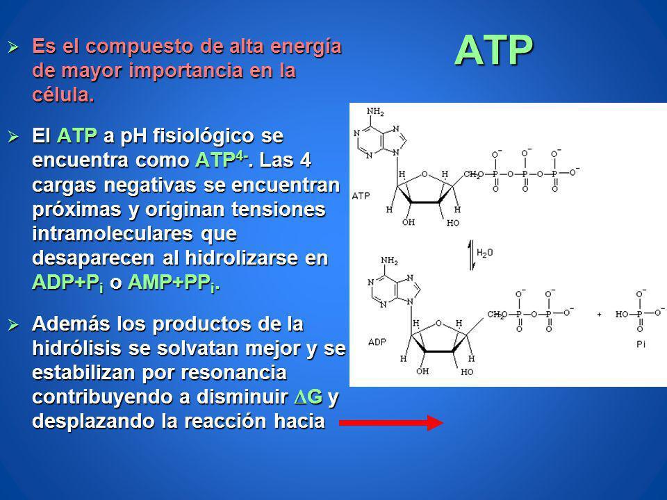 ATP Es el compuesto de alta energía de mayor importancia en la célula.