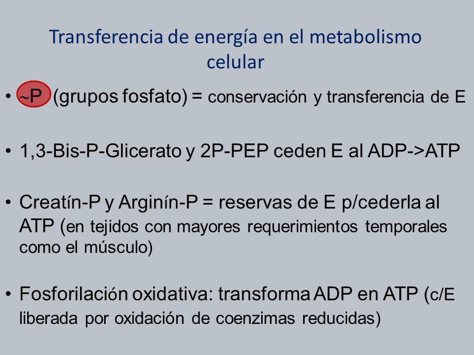 Transferencia de energía en el metabolismo celular