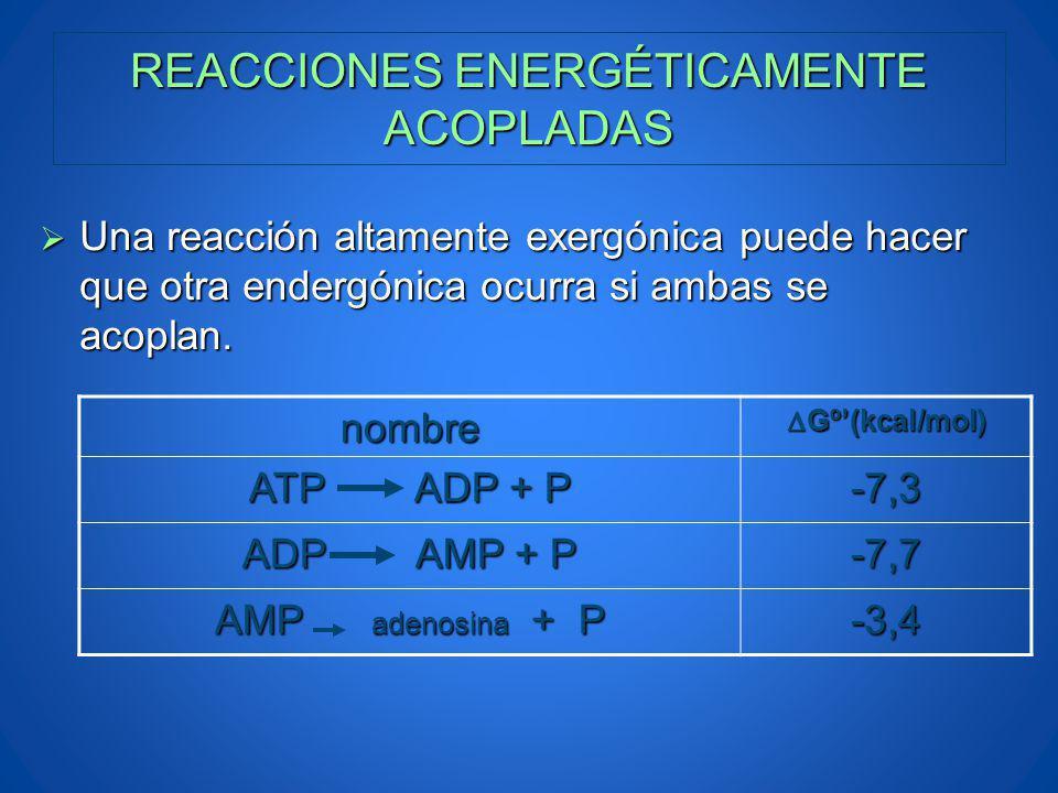 REACCIONES ENERGÉTICAMENTE ACOPLADAS