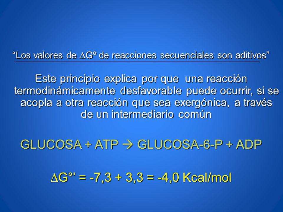 GLUCOSA + ATP  GLUCOSA-6-P + ADP ∆G°' = -7,3 + 3,3 = -4,0 Kcal/mol