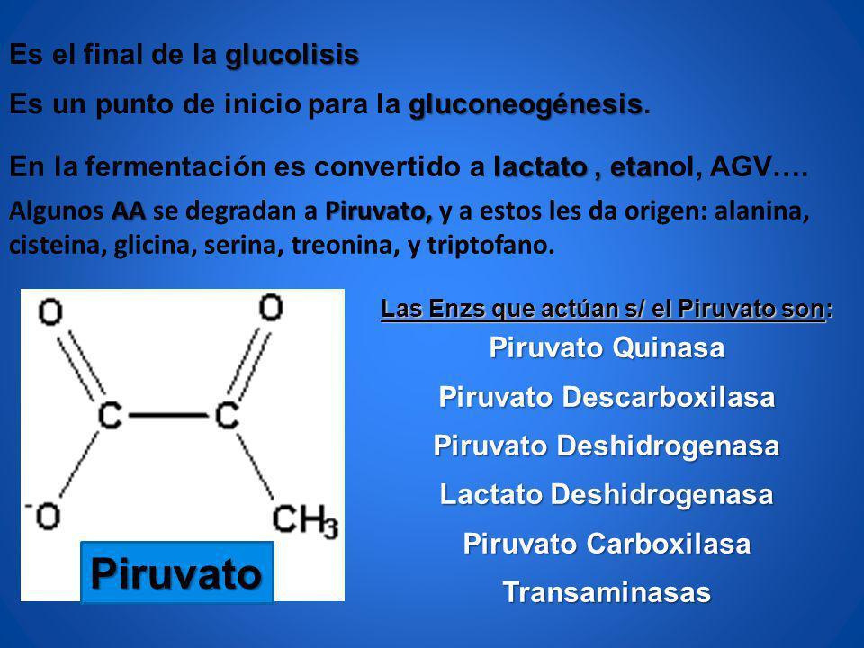 Piruvato Es el final de la glucolisis