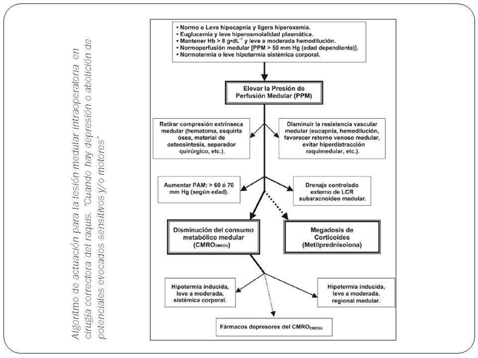 Algoritmo de actuación para la lesión medular intraoperatoria en cirugía correctora del raquis.