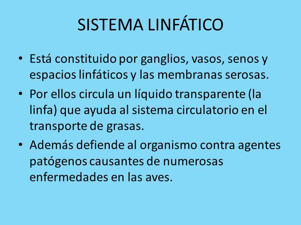 SISTEMA LINFÁTICO Está constituido por ganglios, vasos, senos y espacios linfáticos y las membranas serosas.