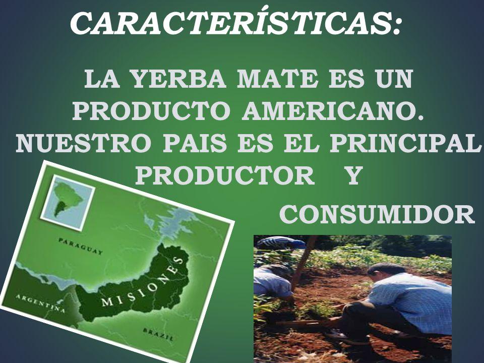 CARACTERÍSTICAS: LA YERBA MATE ES UN PRODUCTO AMERICANO. NUESTRO PAIS ES EL PRINCIPAL PRODUCTOR Y.