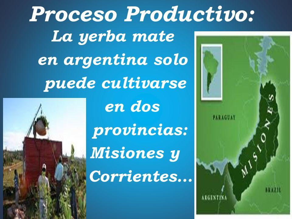 Proceso Productivo: La yerba mate en argentina solo puede cultivarse