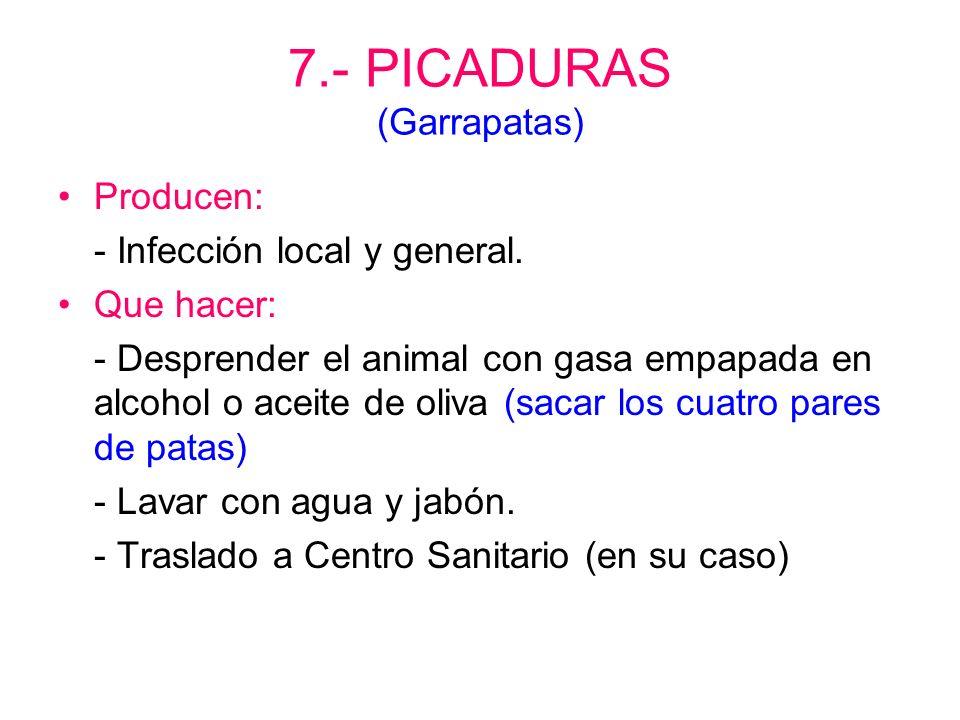 7.- PICADURAS (Garrapatas)