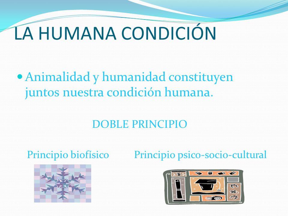 LA HUMANA CONDICIÓN Animalidad y humanidad constituyen juntos nuestra condición humana. DOBLE PRINCIPIO.