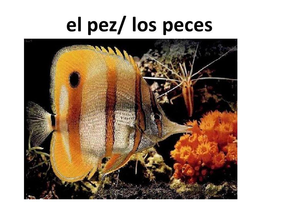 el pez/ los peces