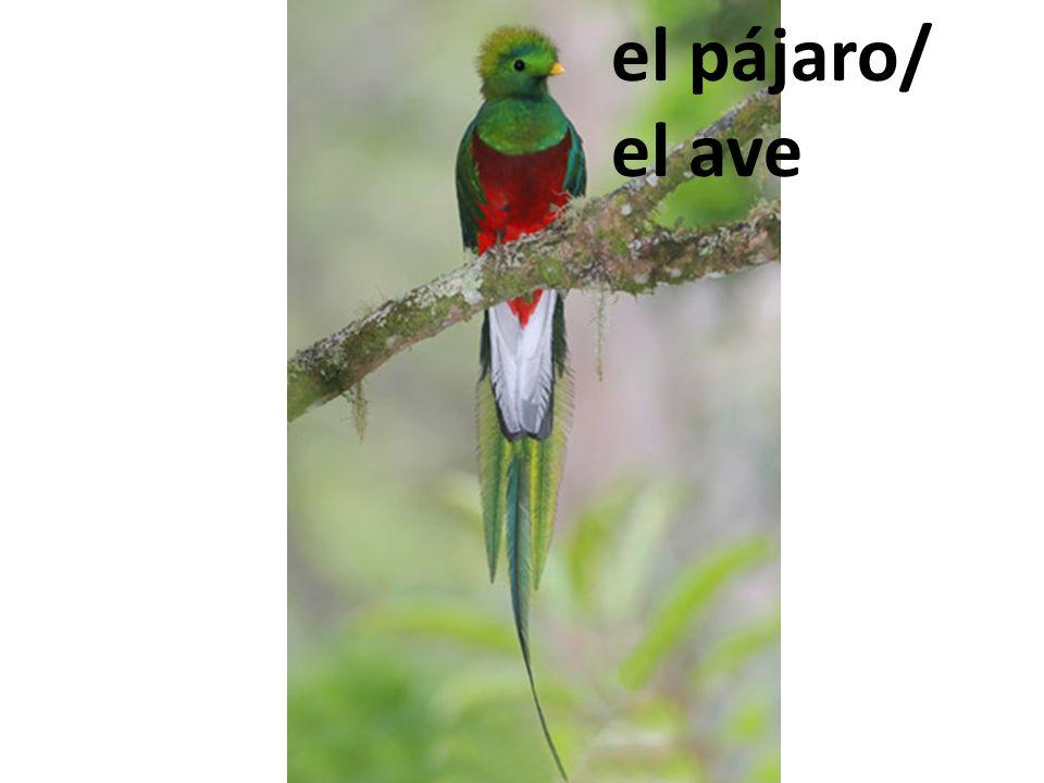 el pájaro/ el ave