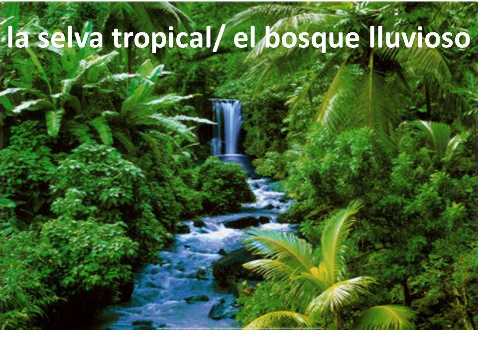 la selva tropical/ el bosque lluvioso