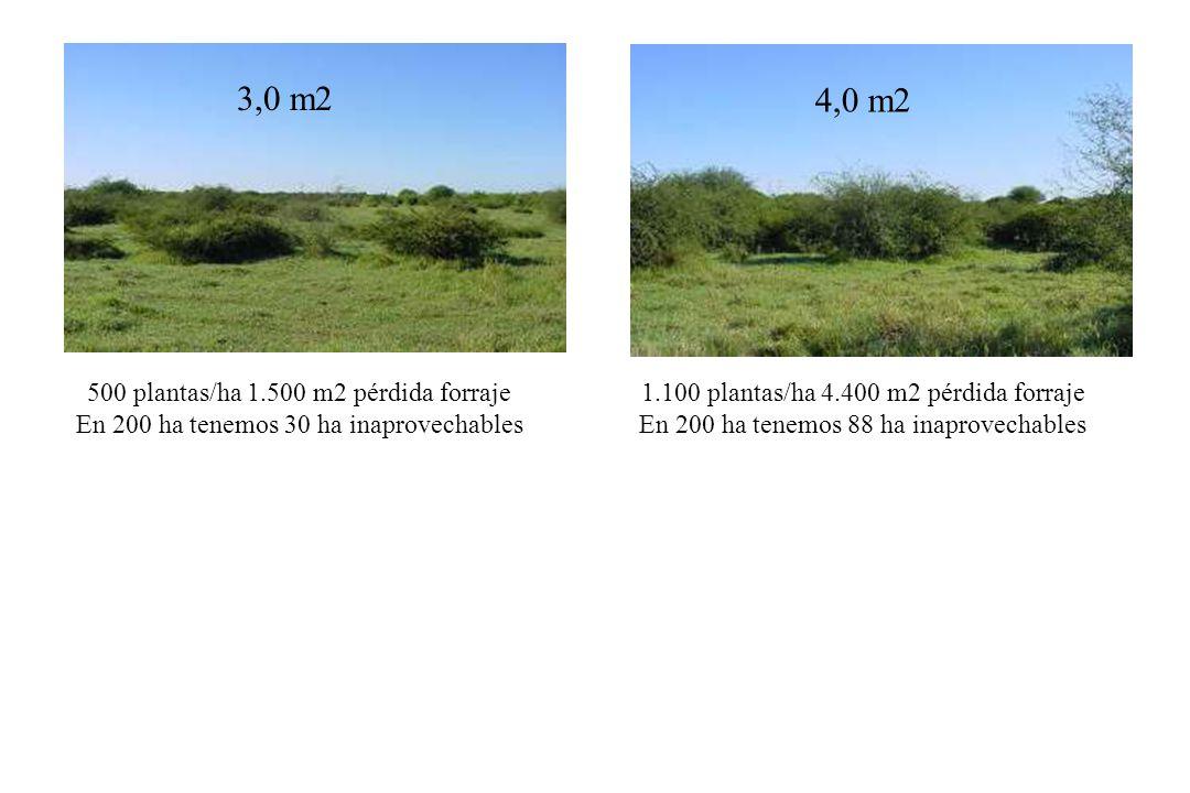 3,0 m2 4,0 m2 500 plantas/ha 1.500 m2 pérdida forraje