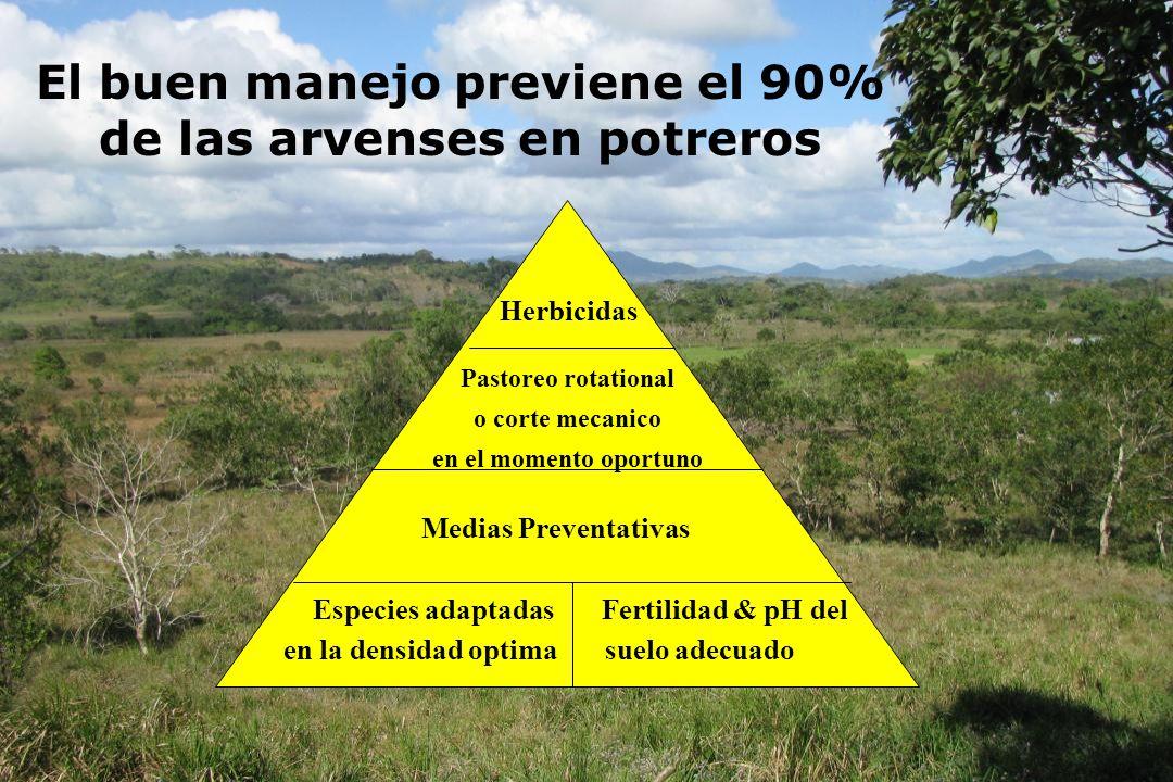 El buen manejo previene el 90% de las arvenses en potreros