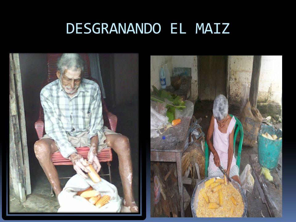 DESGRANANDO EL MAIZ