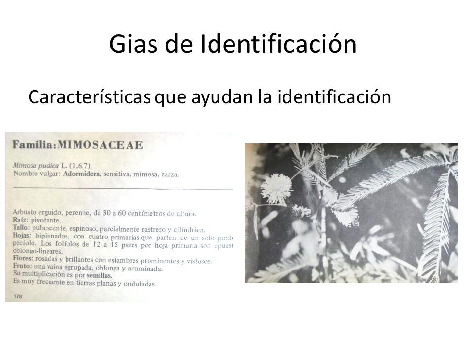 Gias de Identificación