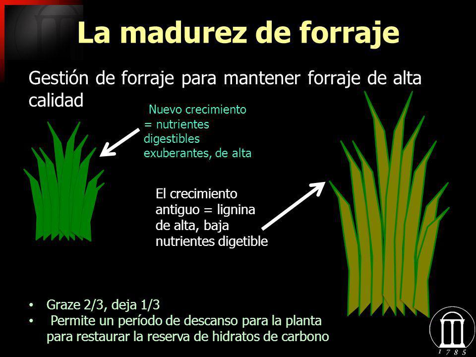 La madurez de forraje Gestión de forraje para mantener forraje de alta calidad. Nuevo crecimiento = nutrientes digestibles exuberantes, de alta.