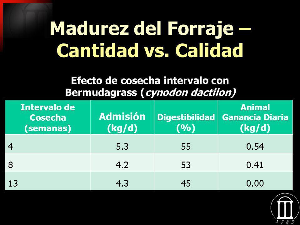 Madurez del Forraje – Cantidad vs. Calidad
