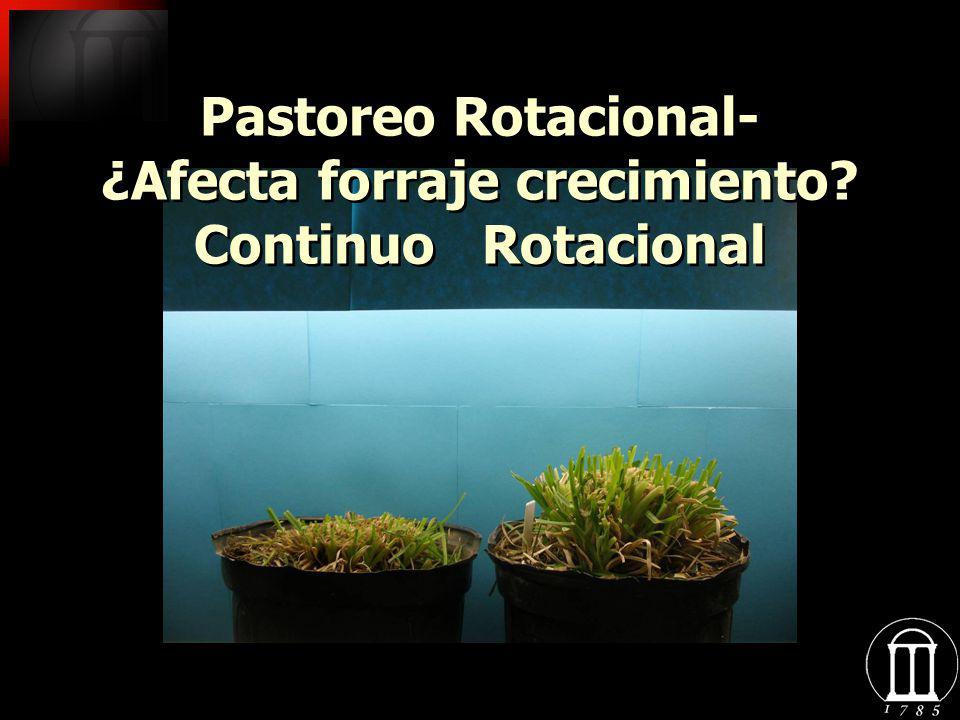Pastoreo Rotacional- ¿Afecta forraje crecimiento Continuo Rotacional