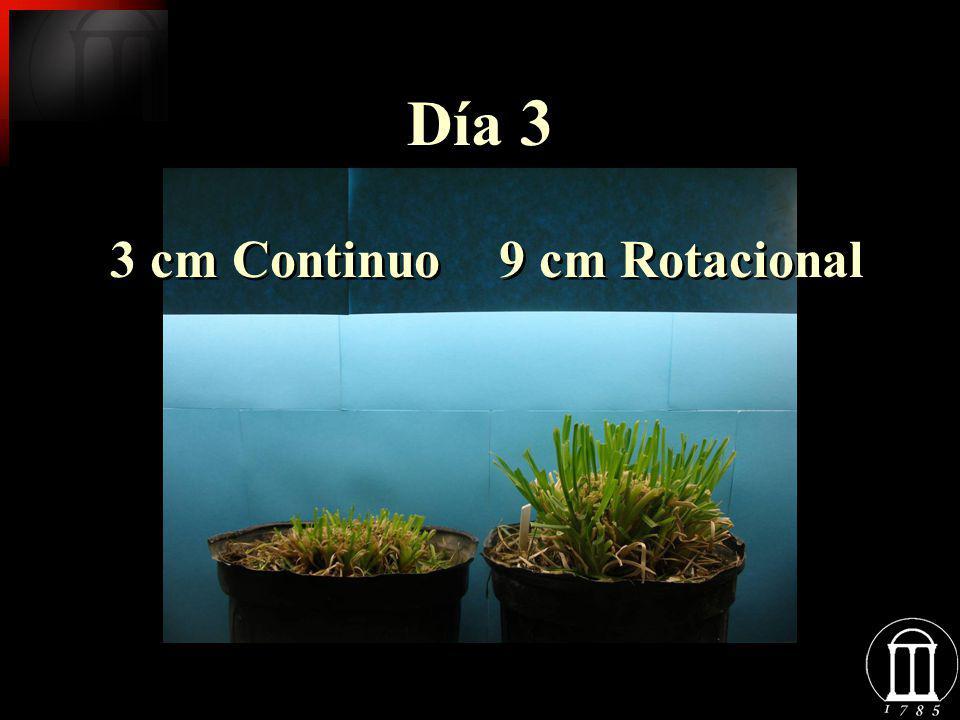 Día 3 3 cm Continuo 9 cm Rotacional