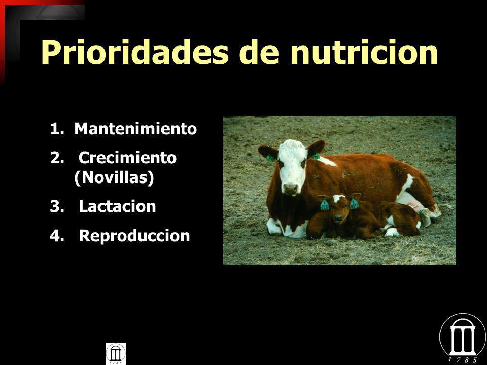Prioridades de nutricion