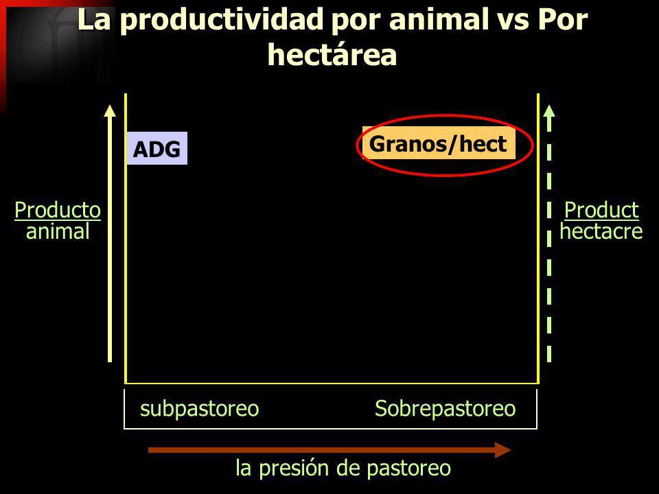 La productividad por animal vs Por hectárea