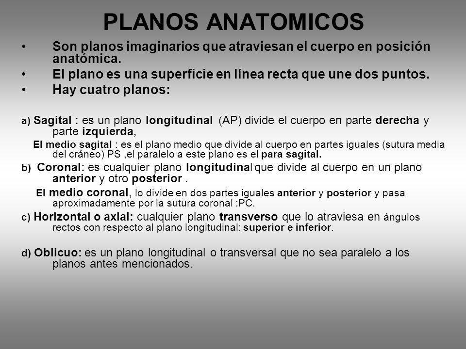 PLANOS ANATOMICOS Son planos imaginarios que atraviesan el cuerpo en posición anatómica.