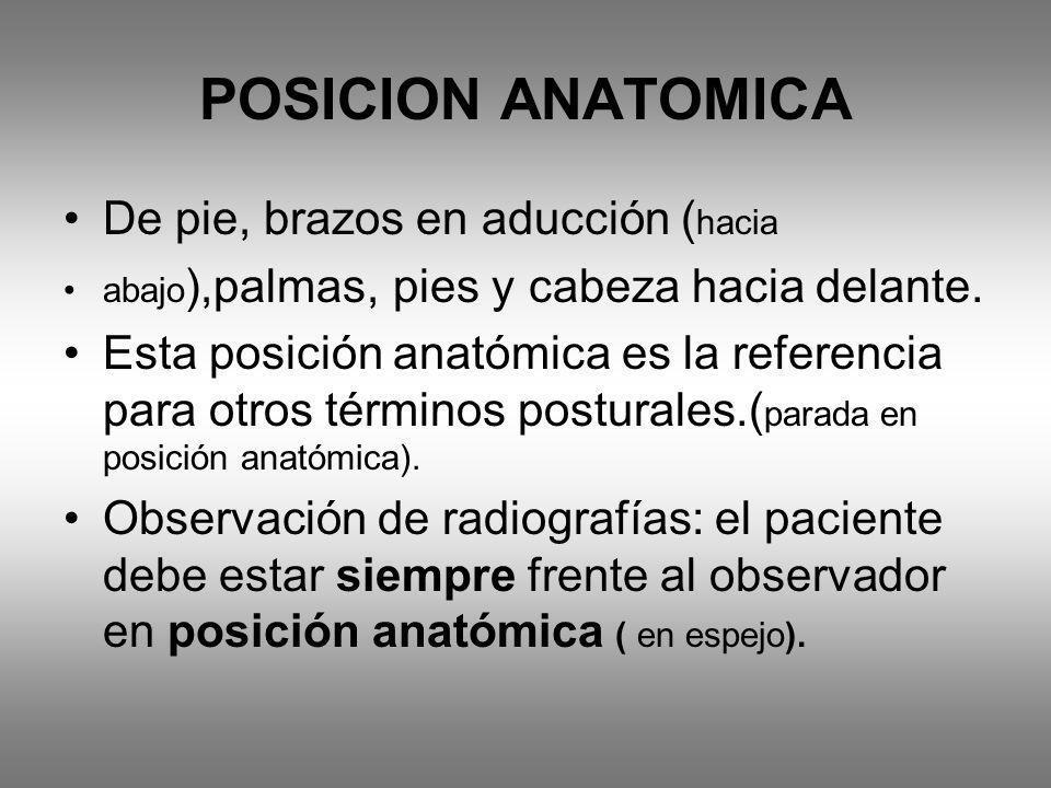 POSICION ANATOMICA De pie, brazos en aducción (hacia
