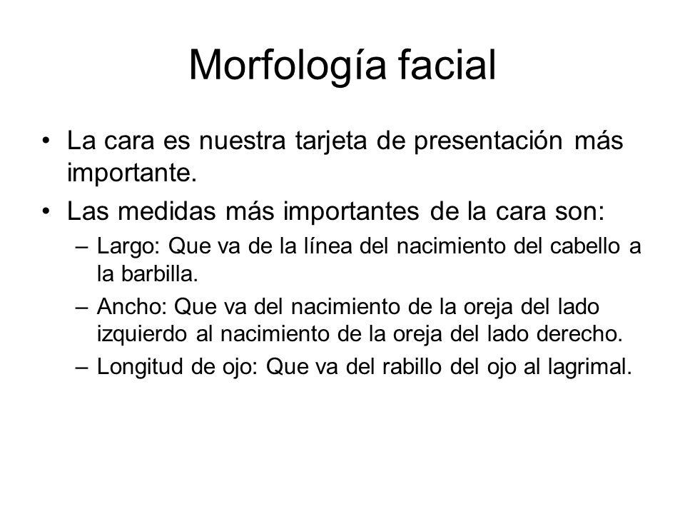 Morfología facial La cara es nuestra tarjeta de presentación más importante. Las medidas más importantes de la cara son:
