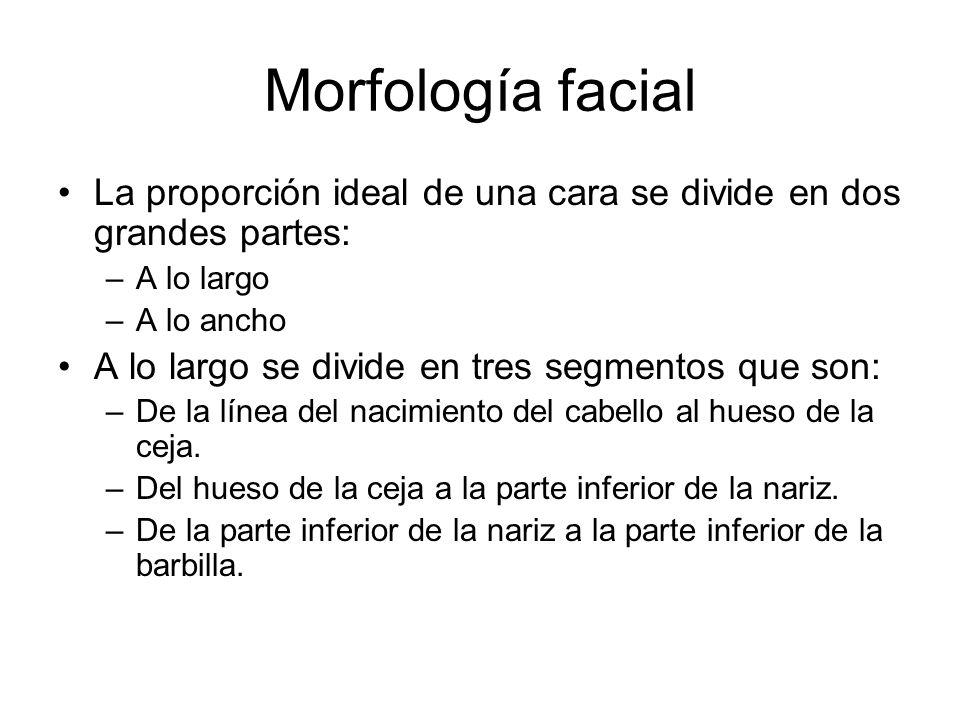 Morfología facial La proporción ideal de una cara se divide en dos grandes partes: A lo largo. A lo ancho.