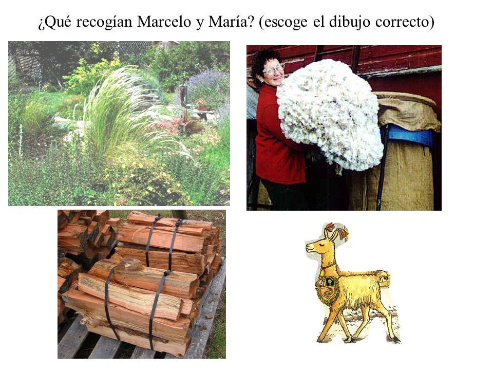 ¿Qué recogían Marcelo y María (escoge el dibujo correcto)