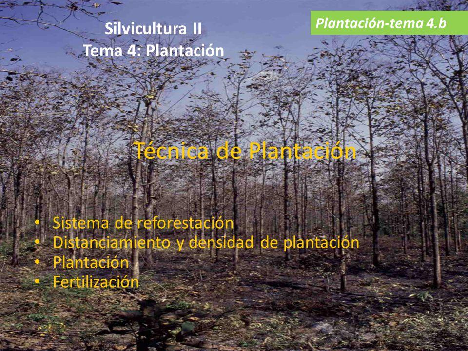Silvicultura II Tema 4: Plantación