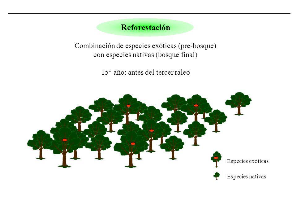 Reforestación Combinación de especies exóticas (pre-bosque)