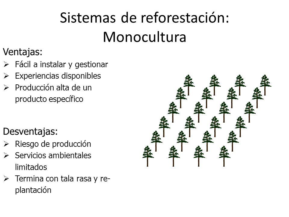 Sistemas de reforestación: Monocultura
