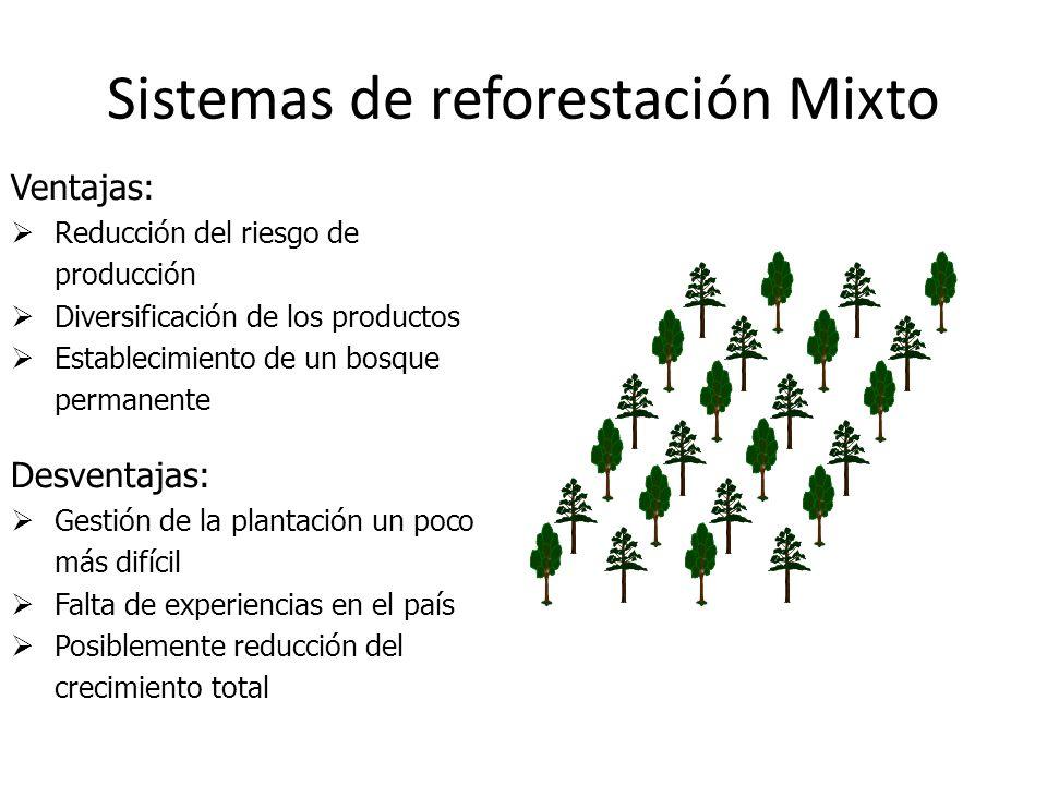 Sistemas de reforestación Mixto