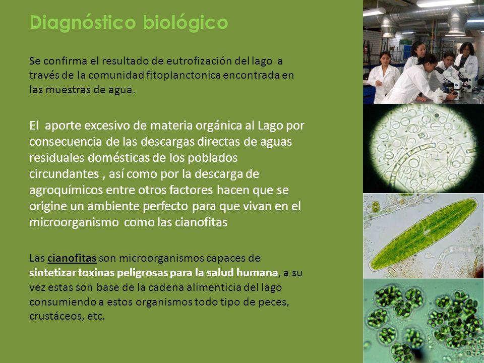 Diagnóstico biológico