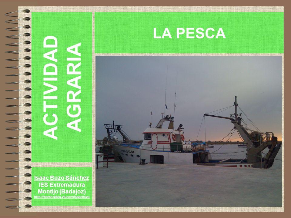ACTIVIDAD AGRARIA LA PESCA Isaac Buzo Sánchez IES Extremadura