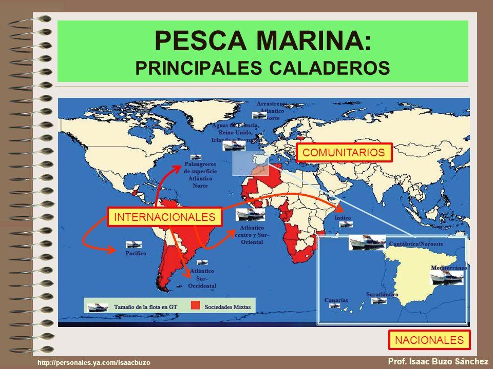 PESCA MARINA: PRINCIPALES CALADEROS